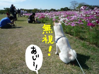 snap_nobirumaruajinikkori_2008101122016.jpg