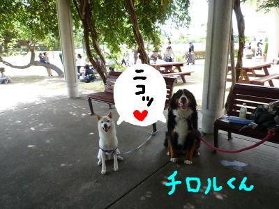 snap_nobirumaruajinikkori_2008101123020.jpg