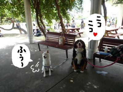 snap_nobirumaruajinikkori_2008101123612.jpg