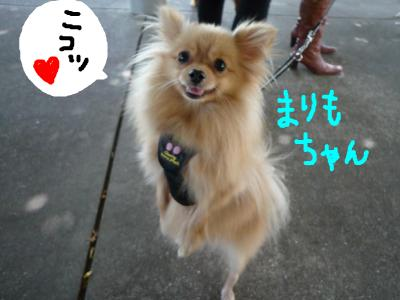 snap_nobirumaruajinikkori_2008101124144.jpg
