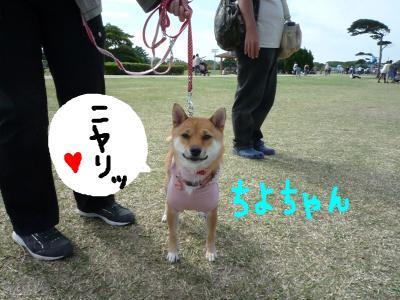 snap_nobirumaruajinikkori_2008101124532.jpg