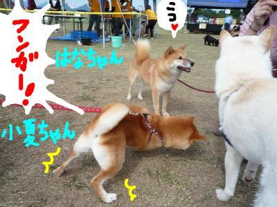 snap_nobirumaruajinikkori_2008101131332.jpg
