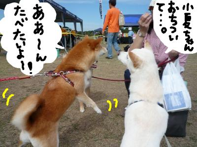 snap_nobirumaruajinikkori_2008101131955.jpg