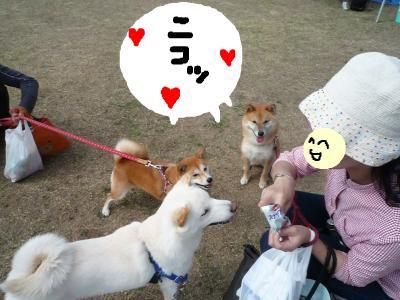 snap_nobirumaruajinikkori_2008101132447.jpg