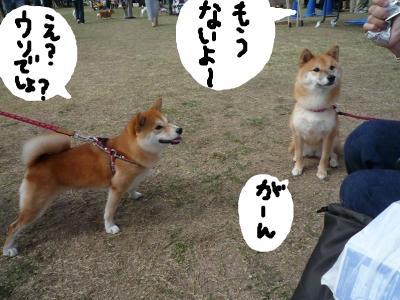 snap_nobirumaruajinikkori_2008101132937.jpg