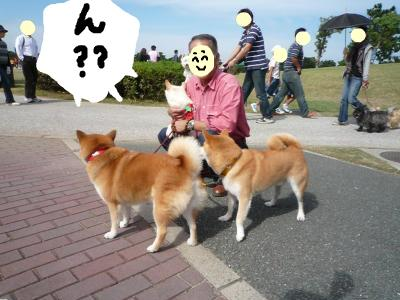 snap_nobirumaruajinikkori_2008101134246.jpg
