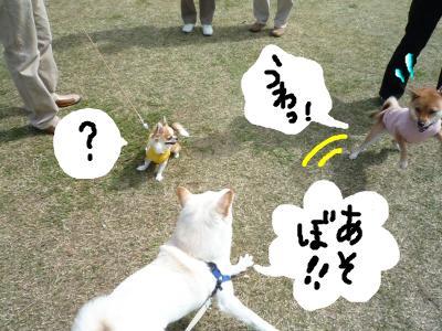 snap_nobirumaruajinikkori_200810113433.jpg