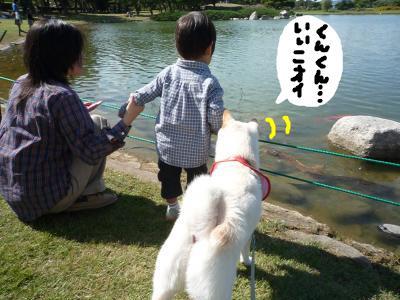 snap_nobirumaruajinikkori_2008101134732.jpg