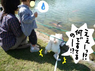 snap_nobirumaruajinikkori_2008101135437.jpg