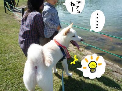 snap_nobirumaruajinikkori_200810114155.jpg