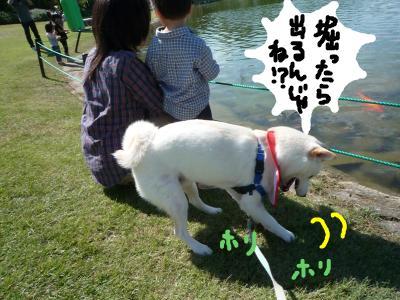 snap_nobirumaruajinikkori_2008101142517.jpg