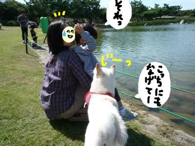 snap_nobirumaruajinikkori_200810114258.jpg