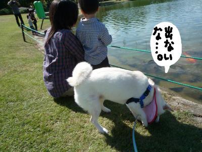 snap_nobirumaruajinikkori_2008101142844.jpg