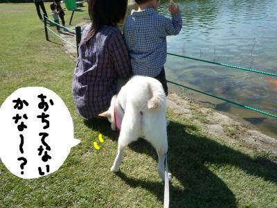 snap_nobirumaruajinikkori_2008101143231.jpg