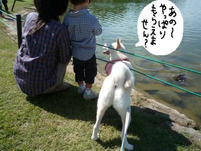 snap_nobirumaruajinikkori_2008101143842.jpg