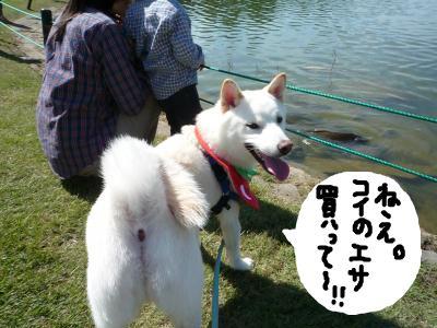 snap_nobirumaruajinikkori_2008101144347.jpg