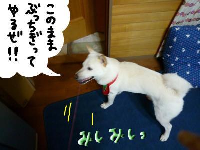 snap_nobirumaruajinikkori_200810301450.jpg