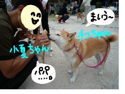 snap_nobirumaruajinikkori_200810301539.jpg