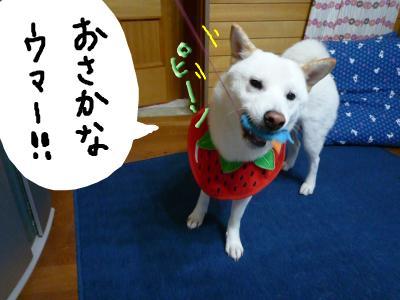 snap_nobirumaruajinikkori_20081030228.jpg