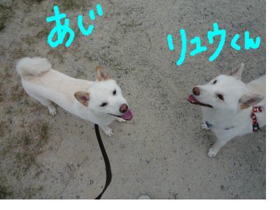 snap_nobirumaruajinikkori_200810302321.jpg
