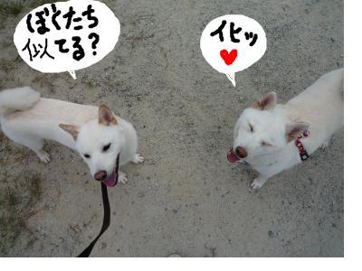 snap_nobirumaruajinikkori_200810302717.jpg