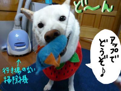 snap_nobirumaruajinikkori_200810302752.jpg