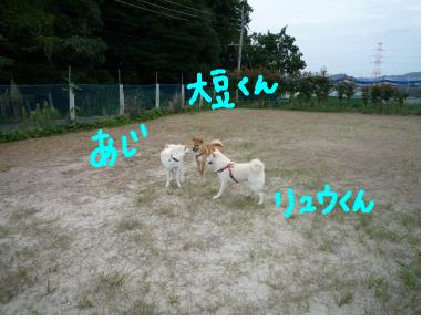 snap_nobirumaruajinikkori_20081030305.jpg