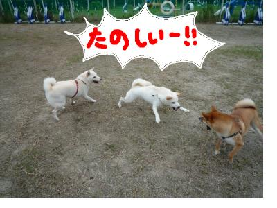 snap_nobirumaruajinikkori_200810304428.jpg