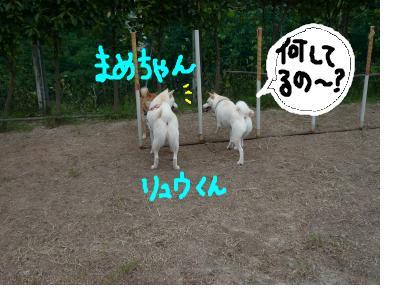 snap_nobirumaruajinikkori_200810305024.jpg