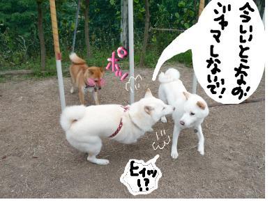 snap_nobirumaruajinikkori_200810305949.jpg