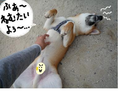 snap_nobirumaruajinikkori_200810311131.jpg