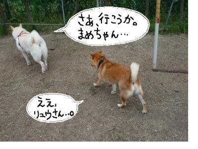 snap_nobirumaruajinikkori_20081031530.jpg