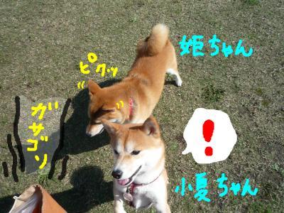 snap_nobirumaruajinikkori_2008103221455.jpg