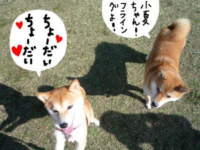 snap_nobirumaruajinikkori_2008103222333.jpg