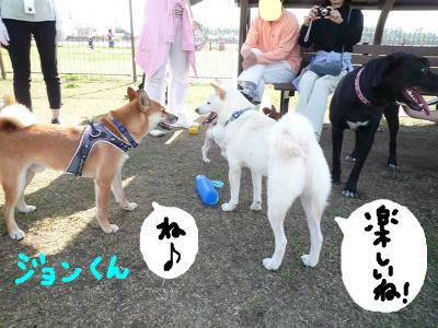 snap_nobirumaruajinikkori_200810322310.jpg