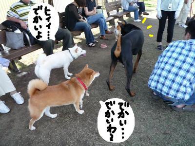 snap_nobirumaruajinikkori_2008103223922.jpg
