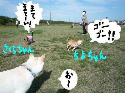 snap_nobirumaruajinikkori_2008103224814.jpg