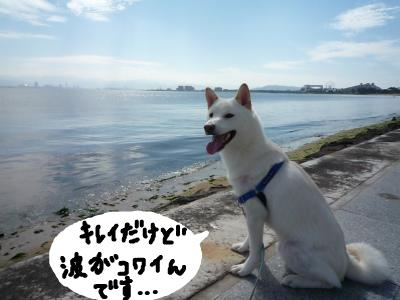 snap_nobirumaruajinikkori_20081032260.jpg