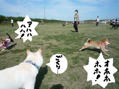 snap_nobirumaruajinikkori_20081040024.jpg