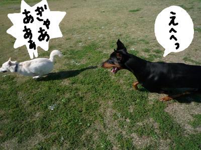 snap_nobirumaruajinikkori_200810402519.jpg