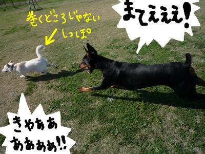 snap_nobirumaruajinikkori_200810403651.jpg
