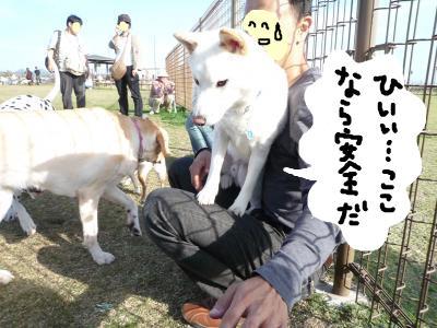 snap_nobirumaruajinikkori_200810404416.jpg