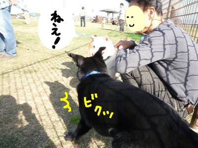 snap_nobirumaruajinikkori_200810405025.jpg