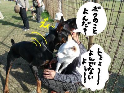 snap_nobirumaruajinikkori_20081041179.jpg