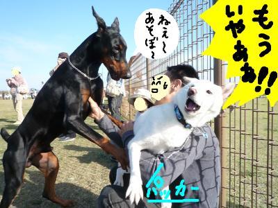 snap_nobirumaruajinikkori_200810412823.jpg