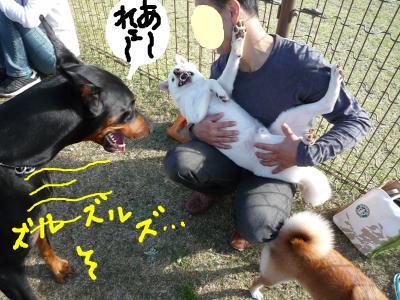 snap_nobirumaruajinikkori_200810415332.jpg
