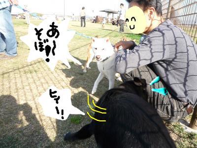 snap_nobirumaruajinikkori_20081041737.jpg