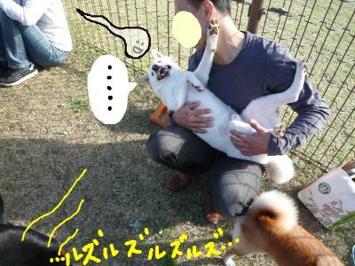 snap_nobirumaruajinikkori_20081042154.jpg