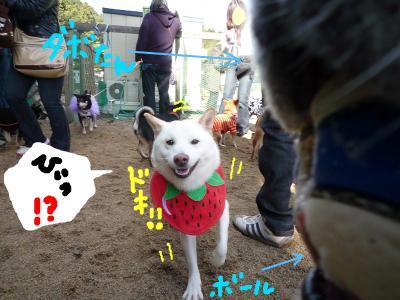 snap_nobirumaruajinikkori_2008110234132.jpg