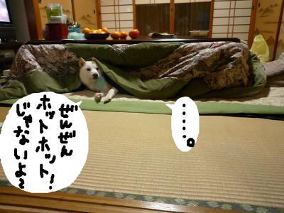 snap_nobirumaruajinikkori_2008110235519.jpg